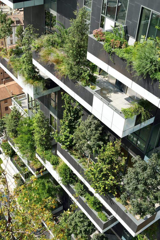 Vertical Forest: Photo 8